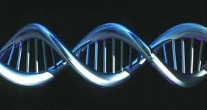 La secuencia de ADN se analisará para conocer las mutaciones sufridas por los seres vivos.