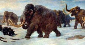 mamut-U10107371408HeE--420x236@abc