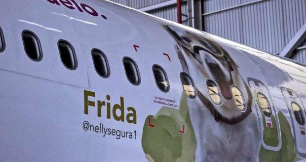 71108024. Tijuana, 8 Nov. 2017 (Notimex-Especial).- La línea aérea Volaris colocó una fotografía de la perrita rescatista Frida en uno de sus aviones como un homenaje a los brigadistas que participaron en las labores de rescate y reconstrucción tras los sismos que afectaron al país en septiembre pasado.NOTIMEX/FOTO/ESPECIAL/COR/EBF/