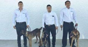 7 Portada Perros